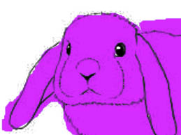 staring right at the rabbit eyes