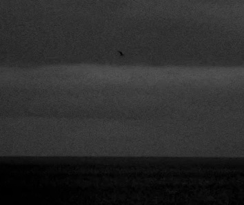 ^ a snippet of the video with the flying bird in the middle