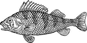 Everyone loves fish!