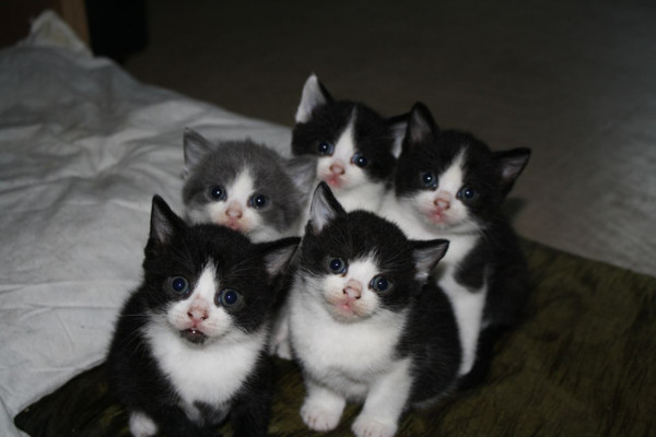 The Itty Bitty Kitty Committee approves this message.