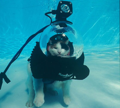 I don't know about you, but I think this cat nailed it by getting his own crazy scuba set up to listen to this song