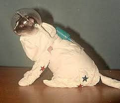 This is AstroCat to Ground Control. I have landed in some sick ass music.
