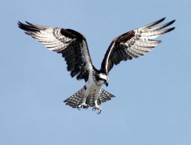 Psst.. OMG psst... OMG is it a airplane, superman,its it.. OMG.. its a BIRD!
