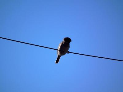 ^ Oh Wow! Wow! WOWOWOW!! It's a bird!